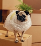 Moving House. Funny Dog On Box